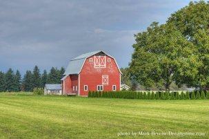 barn and evergreens